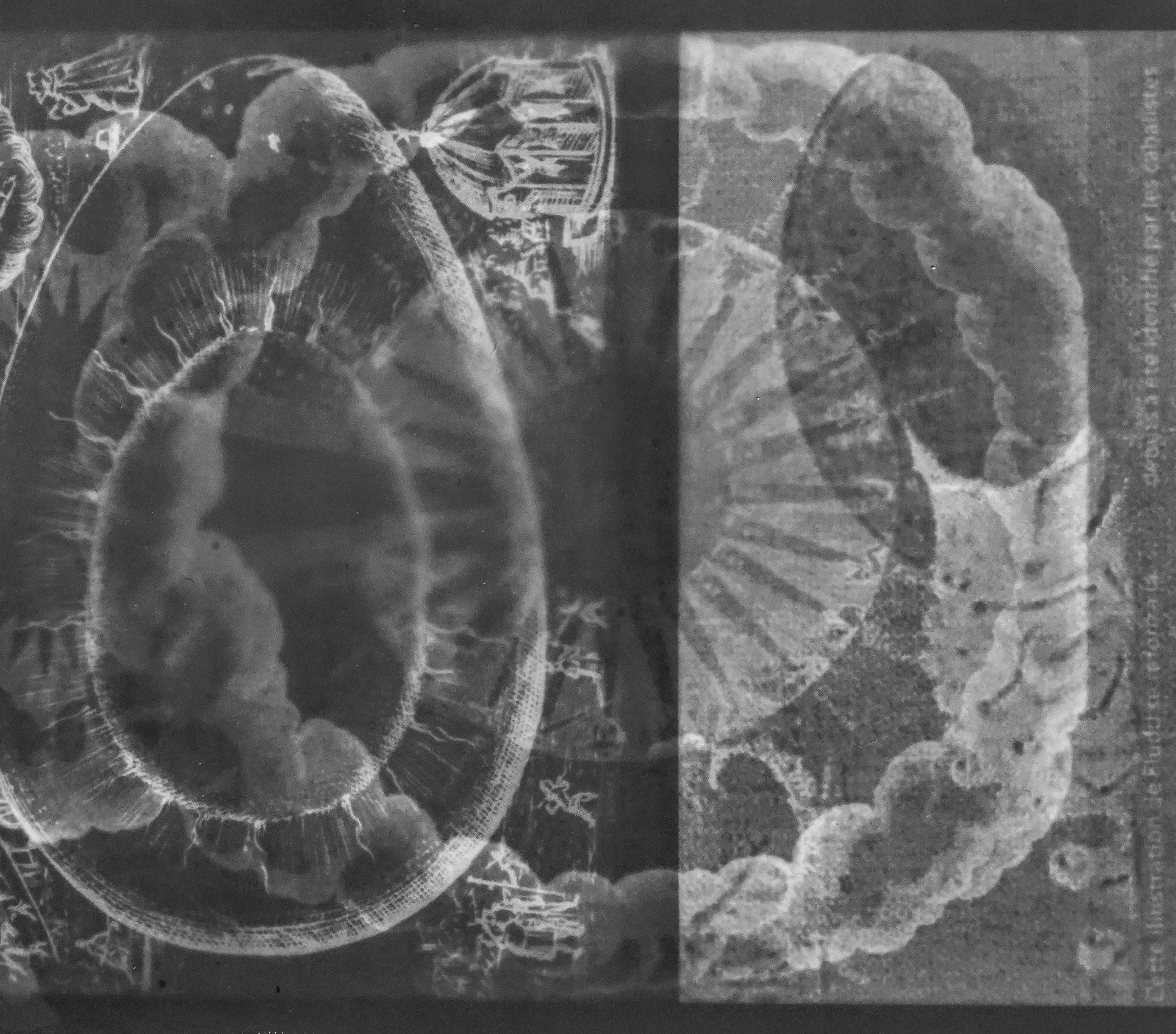 Oeufs miroir (les dernières glandes d'Horus)